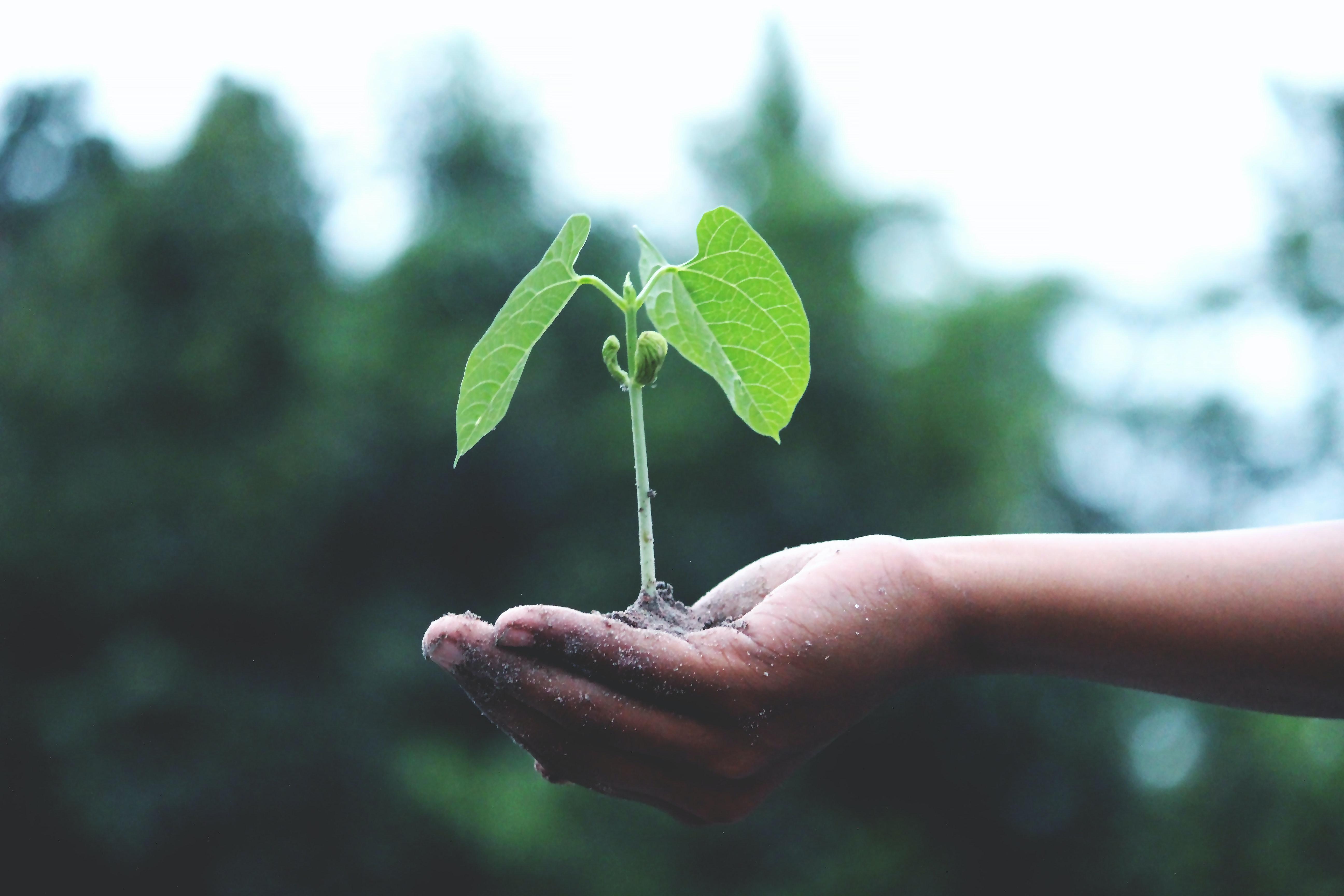 5 ações de sustentabilidade para sua empresa